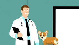A veterinarian examining a dog to help you prepare your pet for relocation